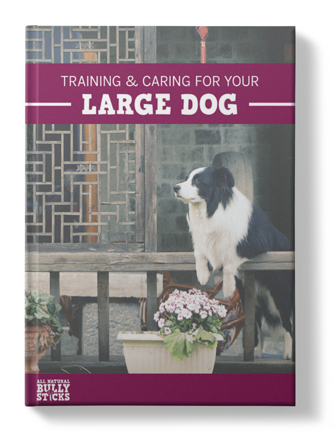 Training and Caring For Your Large Dog