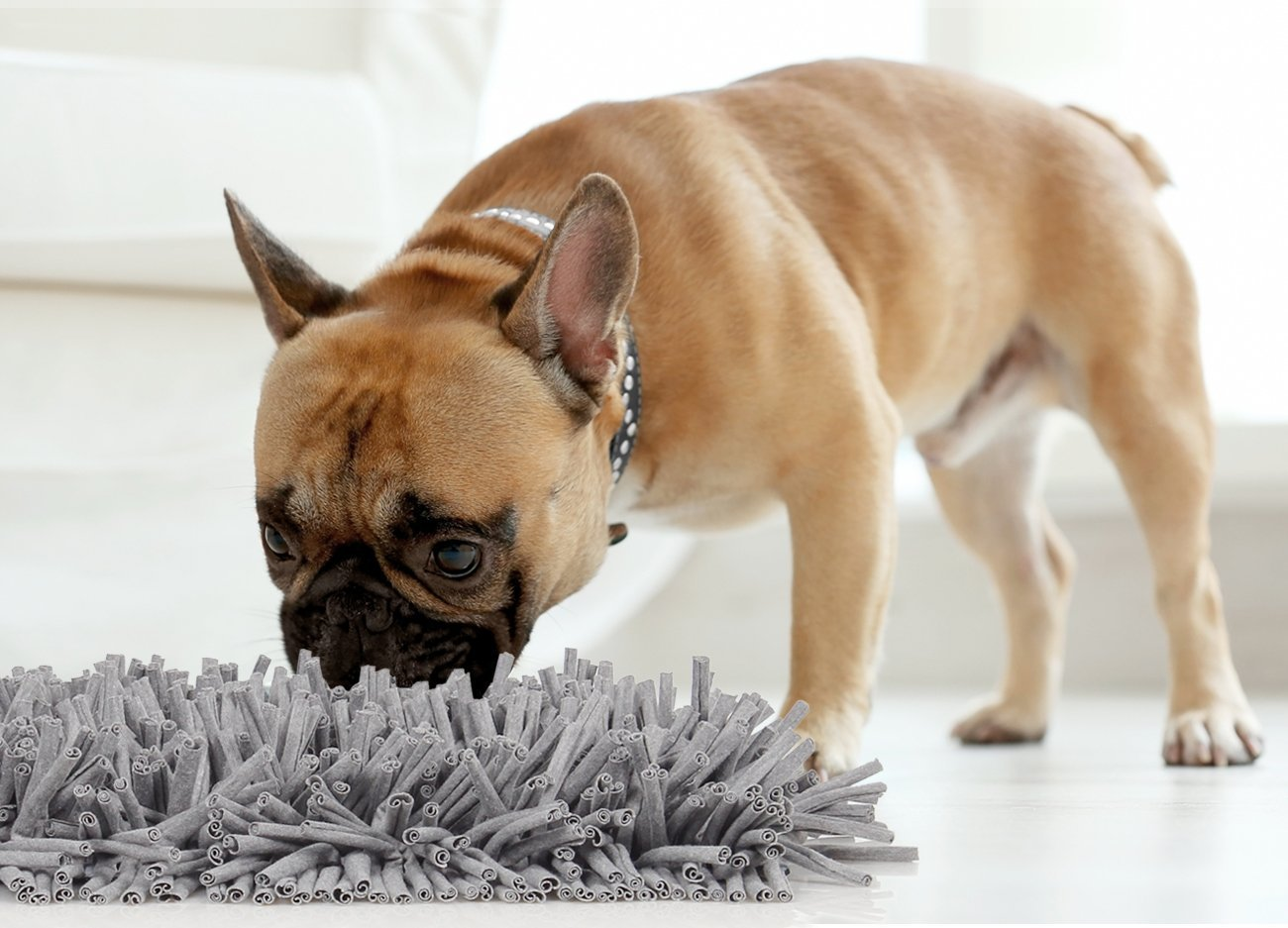 dog sniffing snuffle mat demonstrating large dogs live in apartments