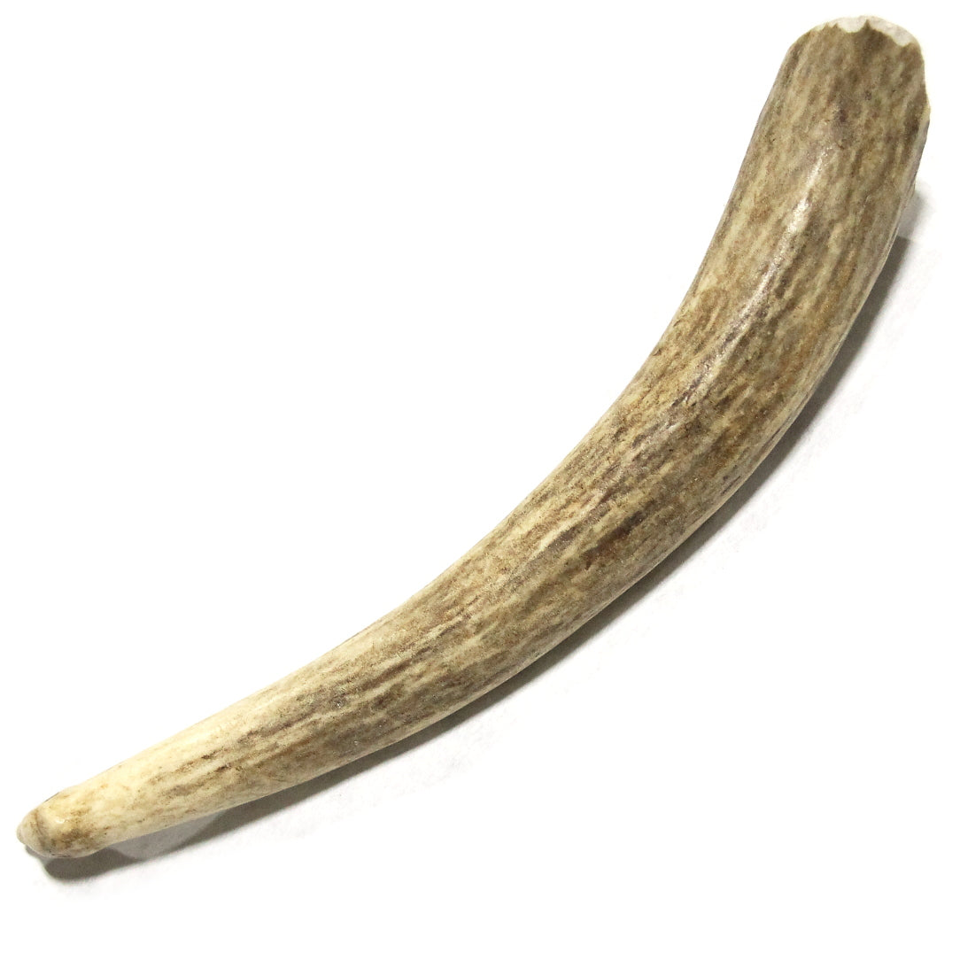 Deer Antler Small