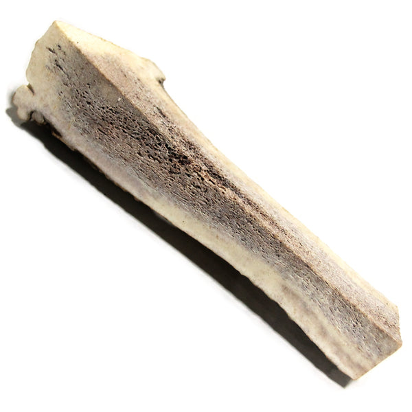 Elk Antler Medium Split