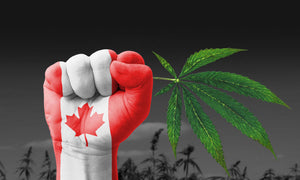 cannabis legalization in Ontario