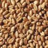 Avangard Malz Premium Wheat Malt - Loose