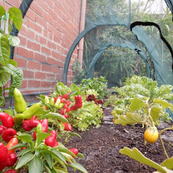 Garden Net Growing Tunnel 2 x 1 x 1m