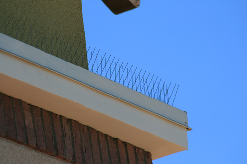 Premium Stainless Steel Bird Repelling Spikes - 25 lineal metres 200mm wide