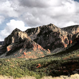 Native Plant Hikes - One, Two, Three Hour Plus - In Sedona