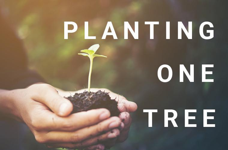 Planting one tree for every sold item
