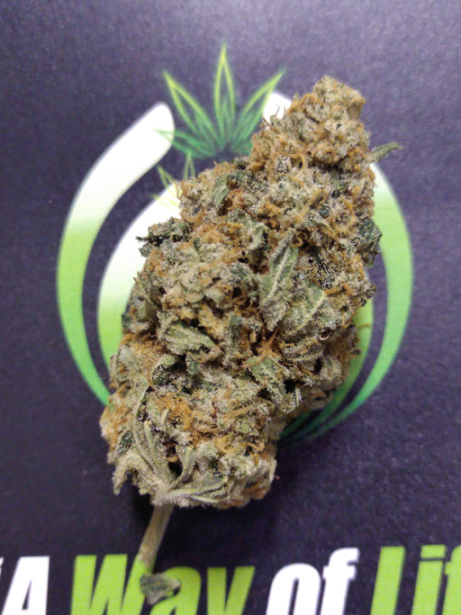 Insane Killer Glue – Hybrid (S) AAAA