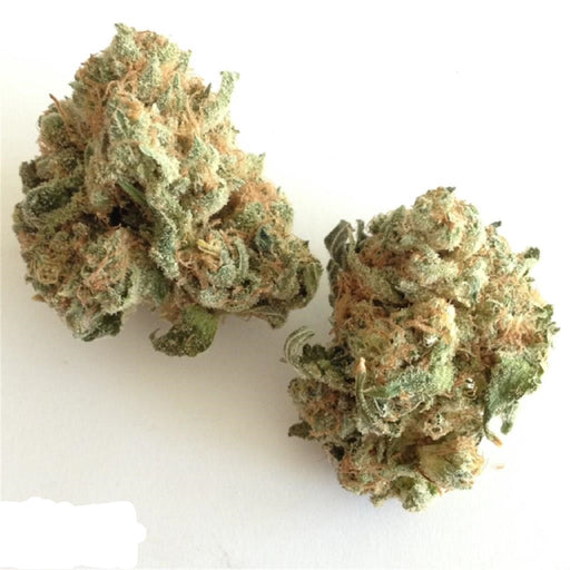 White Widow – Hybrid (S)