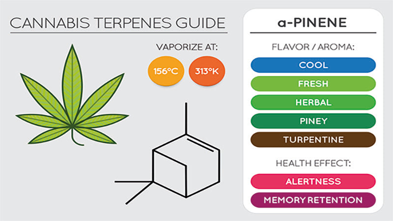 Vaporizing and terpenes flavor