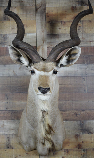 Genuine Mounted Deer - Kudu - Western - Lodge - Cabin-Rustic Deco Incorporated