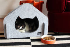 Land of Meow - Acoustic Cat Haus With Cat