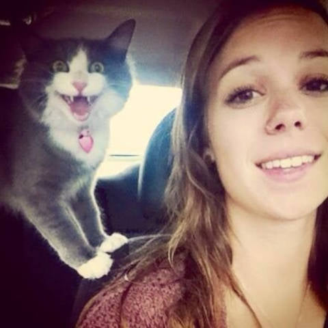 Land of Meow - Cat Photobomb
