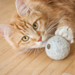 Land of Meow - LucyBalu Mint Ball with Cat