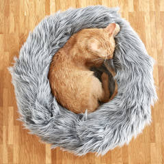 Land of Meow - MiaCara Capello Cat Bed with Cat