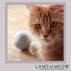 Land of Meow - Mint Ball Instagram