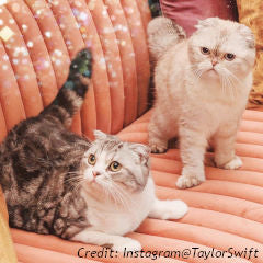 Land of Meow - Taylor Swift Cats Olivia and Meredith