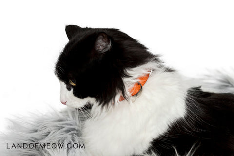 Land of Meow Moshiqa Cat Collar