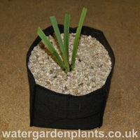 Medium Planting Bag (25cm x 25cm x 20cm)