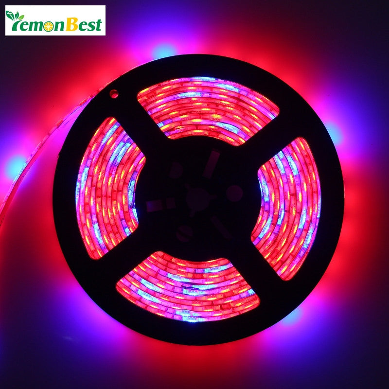 LED Grow Lamp 5050 Led Strip 5M Grow Light 5:1 5 Red 1 Blue Aquarium Greenhouse Hydroponic Plant Growing Lamp 60led/m
