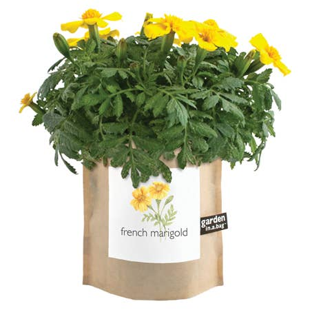 Potting Shed Creations, Ltd. - Garden in a Bag | French Marigold - Pen & Grey