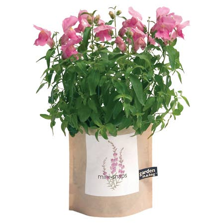 Potting Shed Creations, Ltd. - Garden in a Bag | Snapdragon - Pen & Grey