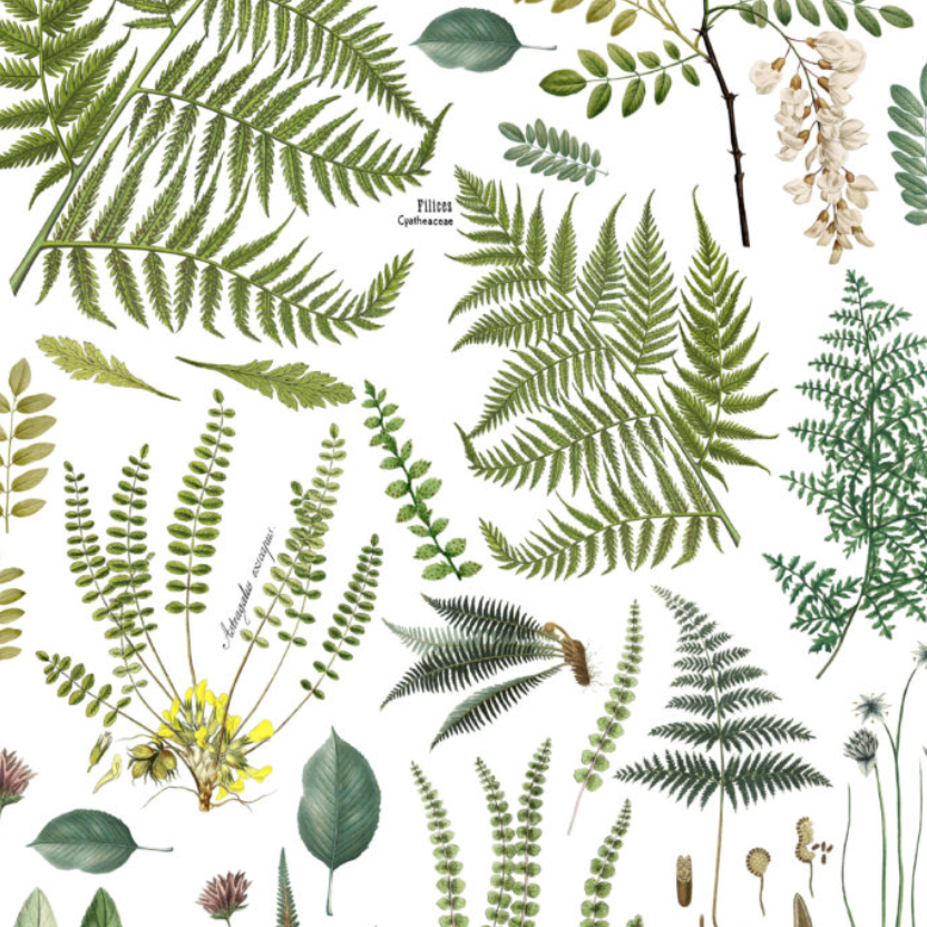 IOD Fronds Botanical 24 x 33 Decor Transfer - Pen & Grey