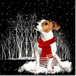 Jack Russell Terrier™ COMBO SILVER FOR WINNERS fb121