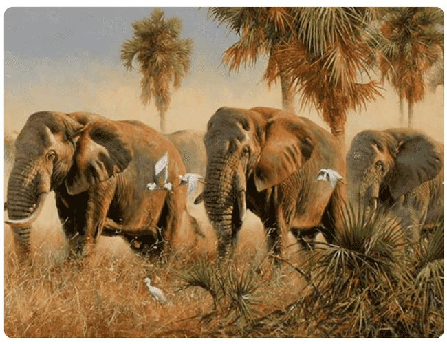 Elephants In The Wild - LOVIELO