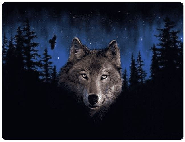 Wolf At Night - LOVIELO