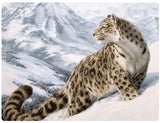 Leopard At Snow - LOVIELO