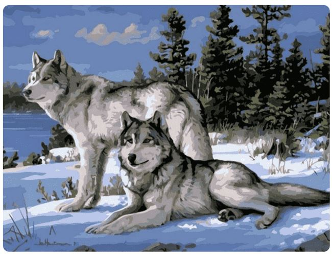 Wolves In The Snow - LOVIELO