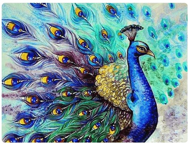 Royal Peacock - LOVIELO