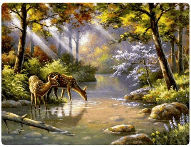Deer Drinking From A Forest River - LOVIELO