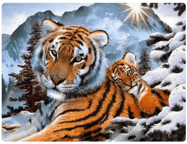 Tiger Family at Snow - LOVIELO
