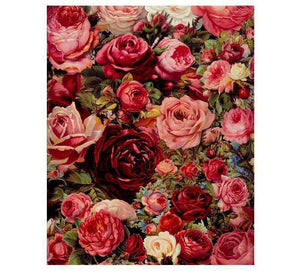 Stunning Red and Pink Roses - LOVIELO