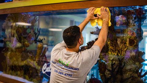 Don't forget to clean the glass! Our staff can offer personalized advice for keeping your tanks clean and your aquariums maintained.