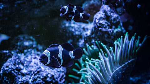 Have clown fish? We can help ensure you have the right aquatic environment to keep them happy and safe