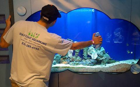 Our tank care experts know everything there is to know about aquarium maintenance and fish tank cleaning
