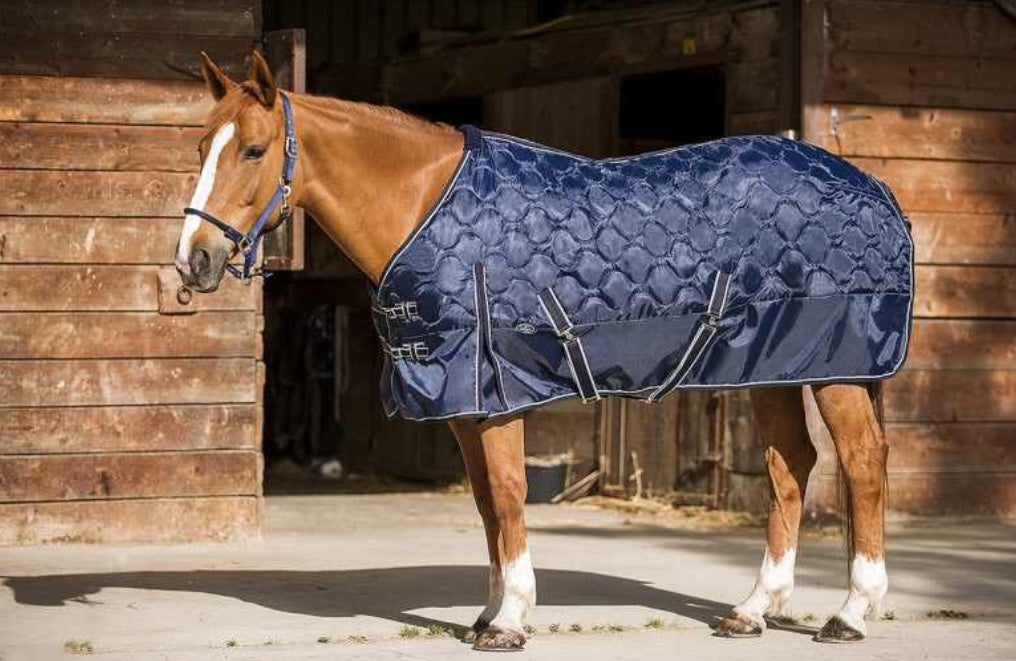 Norton medium weight stable rug