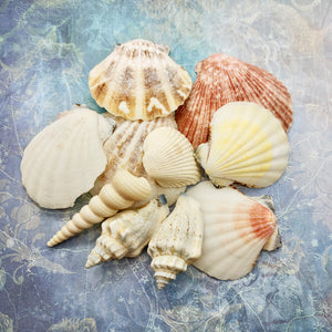 Shells [My Heart is at Sea]