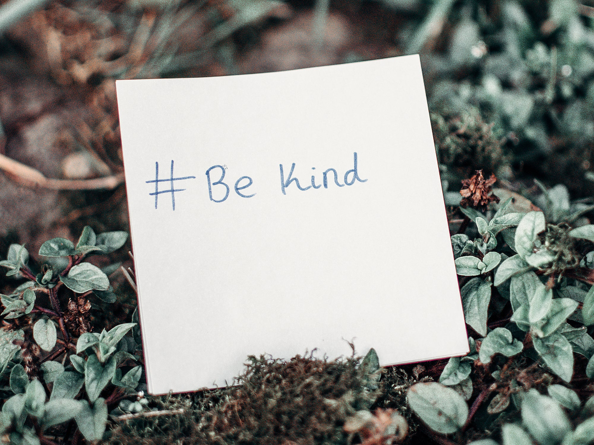 Sow More Seeds of Kindness