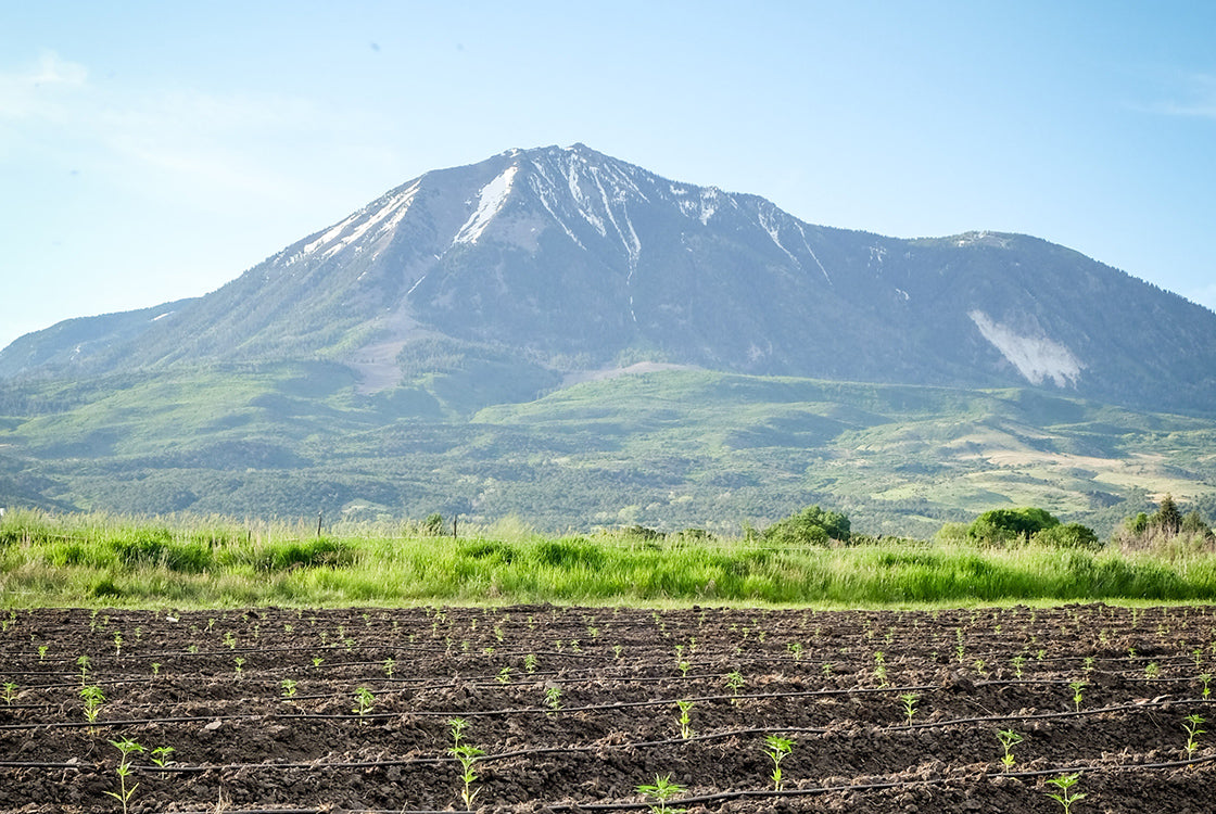 Biodynamic Farming Colorado Hemp
