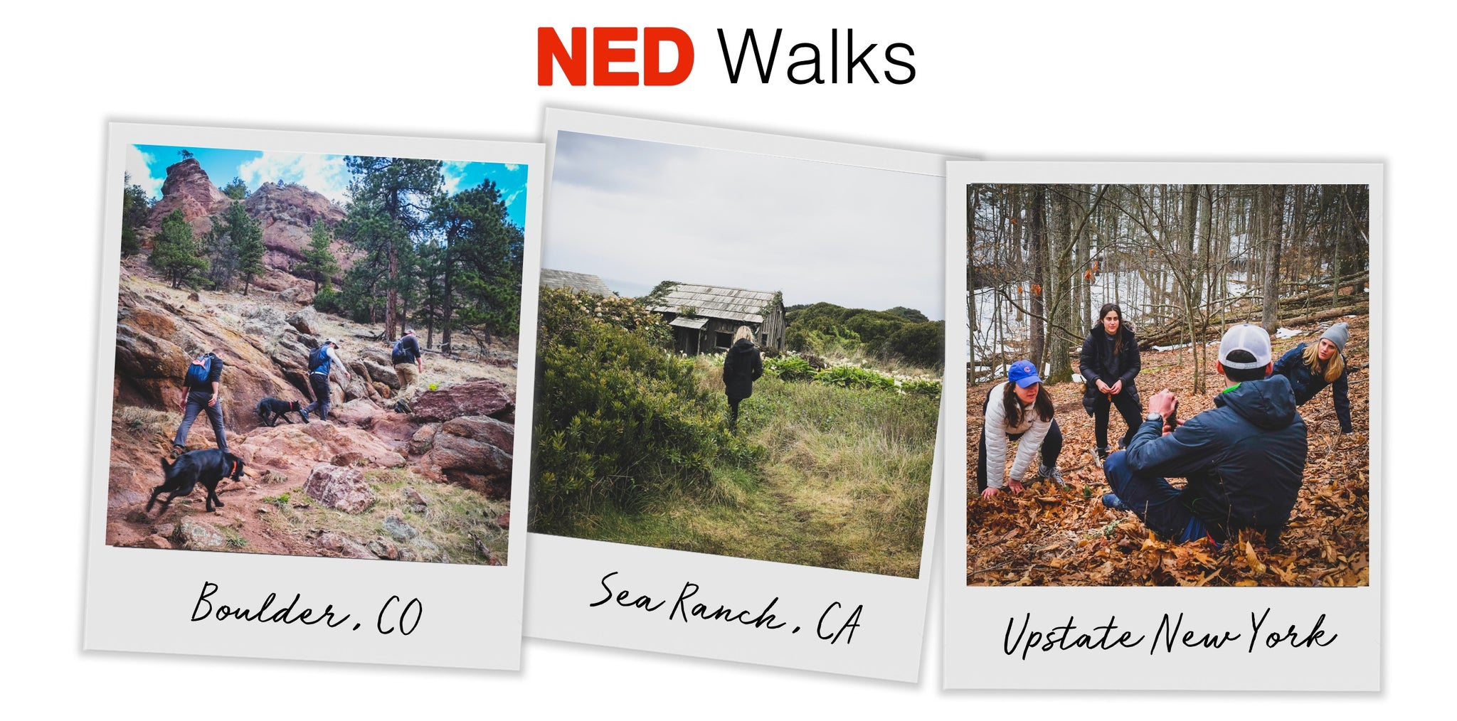 Ned_Walks