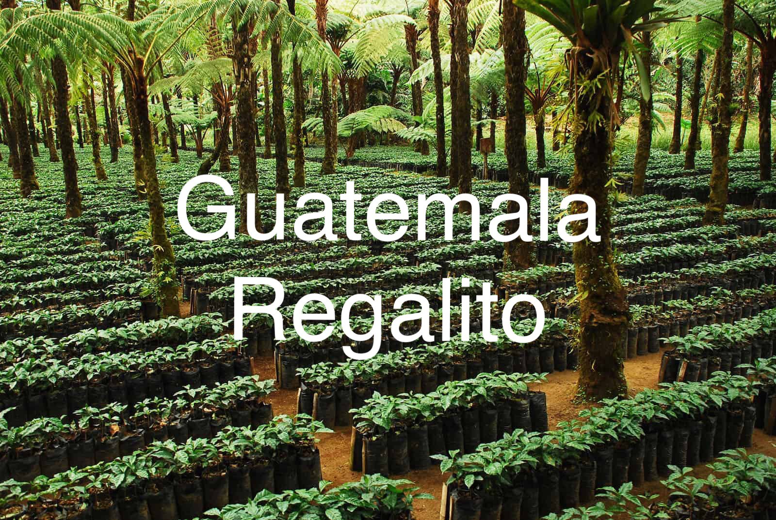 Guatemala Regalito - Medium