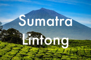 Sumatra Lintong Triple Pick - Medium