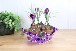 Floral Arrangement - Clay Pots with Spring Bulbs in Heart Basket
