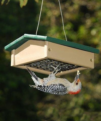 Suet Feeders