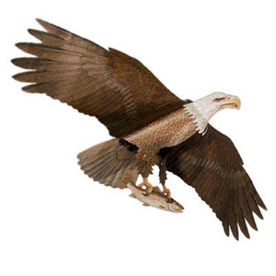 Jackite American Bald Eagle Kite, 60