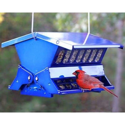 Double Sided Absolute II Electric Blue Bird Feeder - BirdHousesAndBaths.com