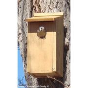 Kestrel and Screech Owl House - BirdHousesAndBaths.com